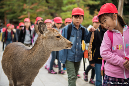 Nara is located in the Kansai region of Japan and deer run wild in the park and streets.